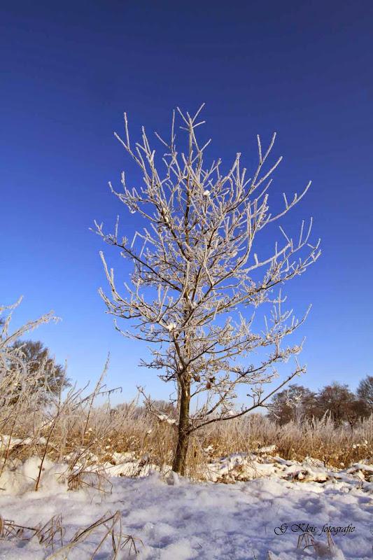 Winter - Winter-029.jpg