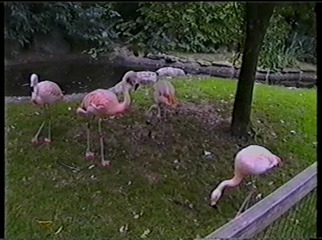 2001.08.26-007 flamants roses