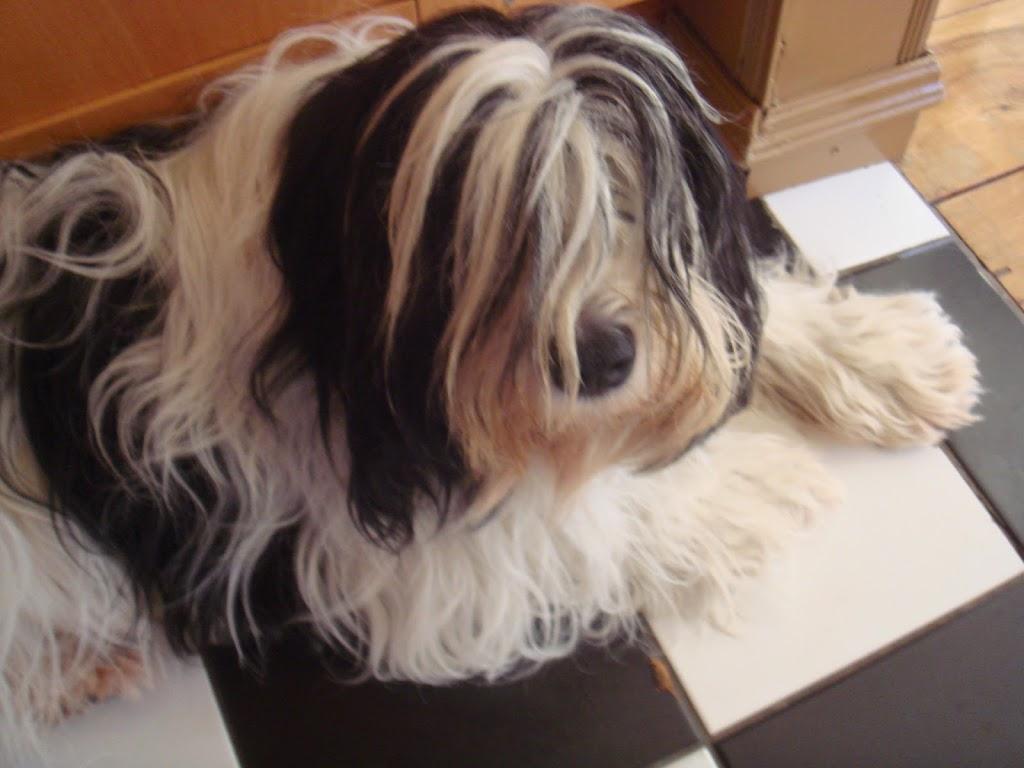Pups Anne 2011 (4)