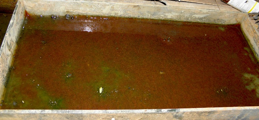 Tubifex Worm Culture Billedgalleri - whitman gelo-seco info