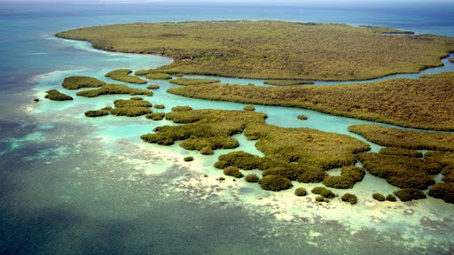 Coral Reef, Belize.jpg