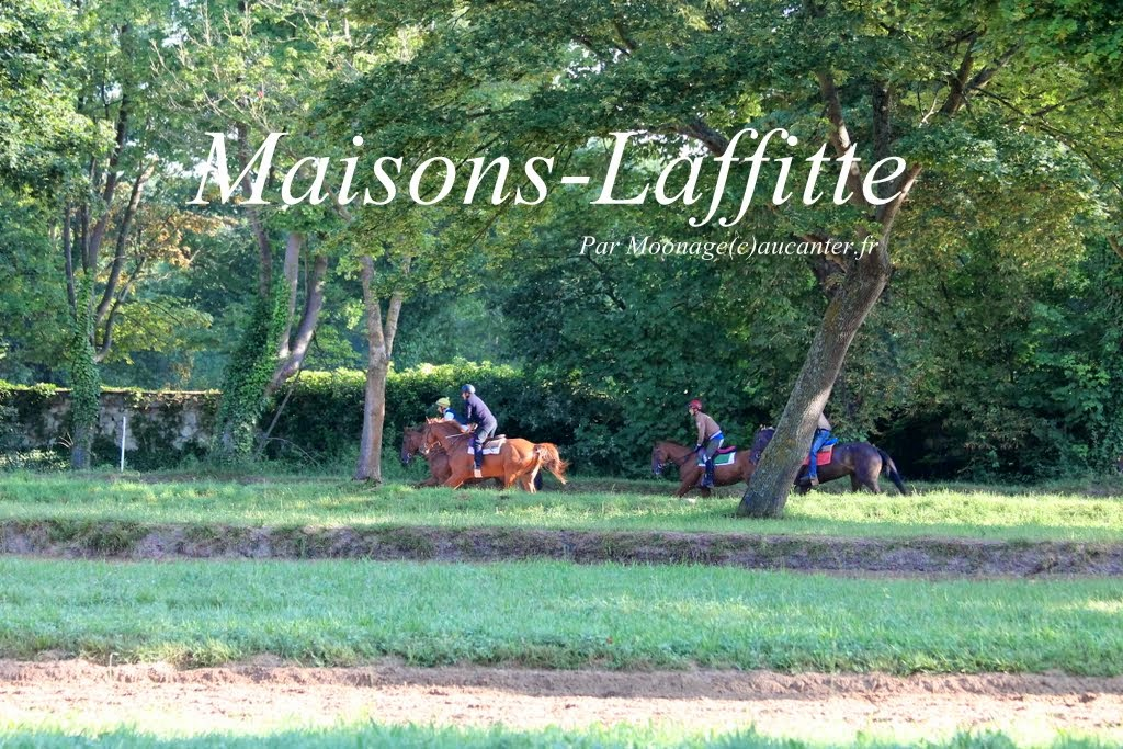 Photos Maisons-Laffitte entrainement 31-07-2014 IMG_2503