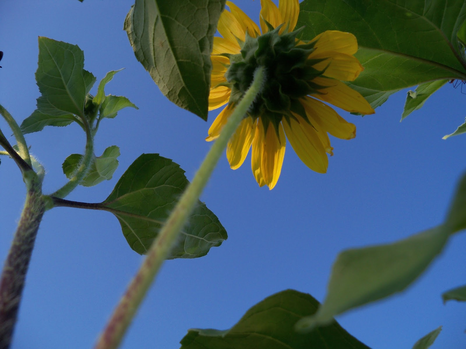 Gardening 2012 - 115_2672.JPG