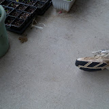 Gardening 2012 - 115_1303.JPG