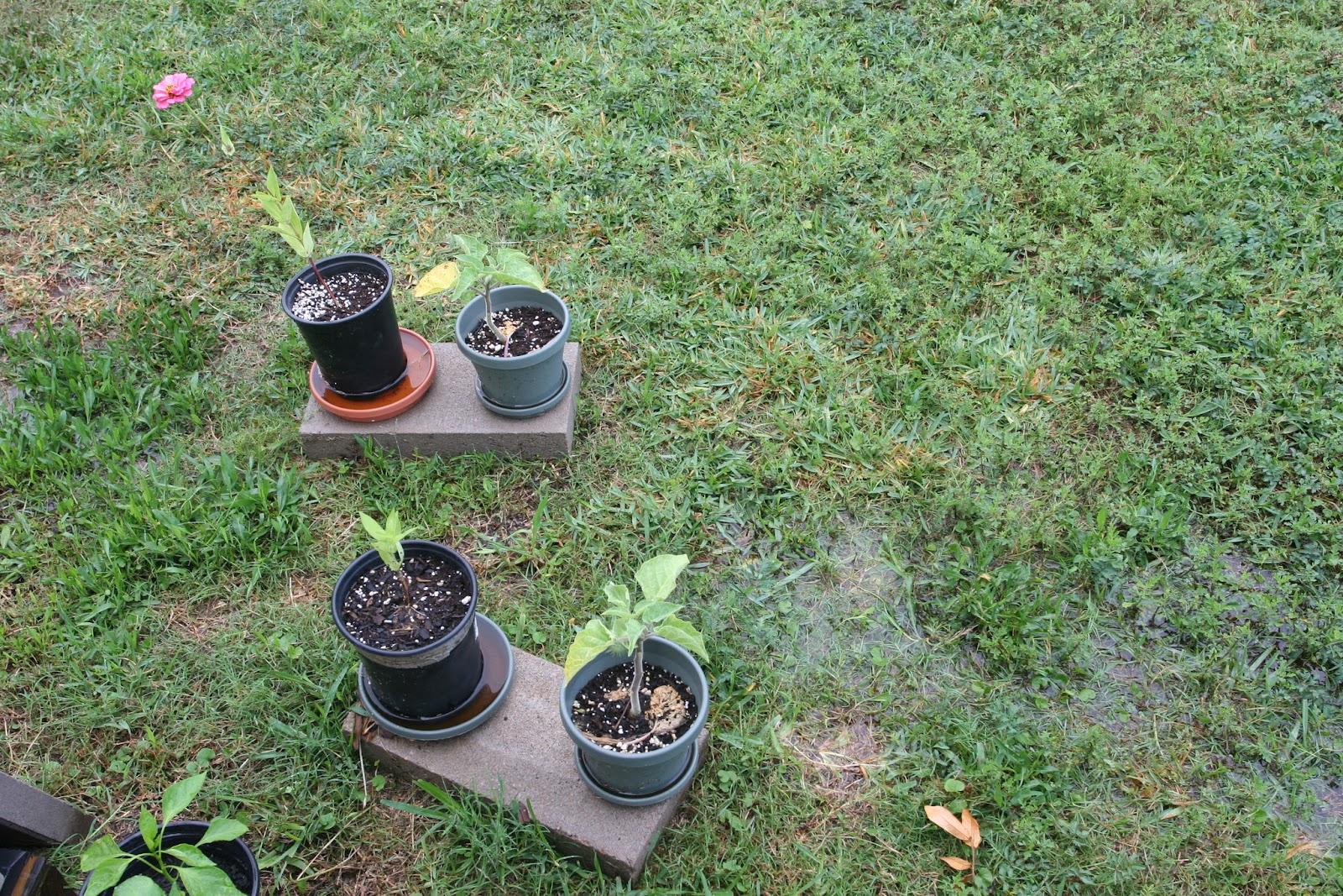 Gardening 2012 - IMG_3536.JPG