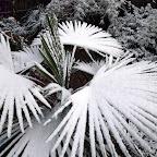snow-day_12-5-09