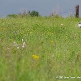 2013 Spring Flora & Fauna - IMGP6322.JPG