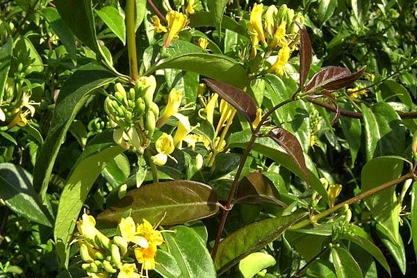 Aiuto per fioriere in legno divisorie piante e - Rampicanti a crescita rapida ...