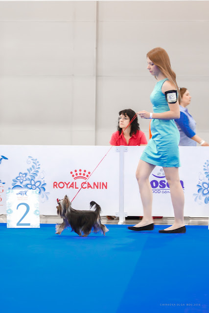 World Dog Show-2016 0081
