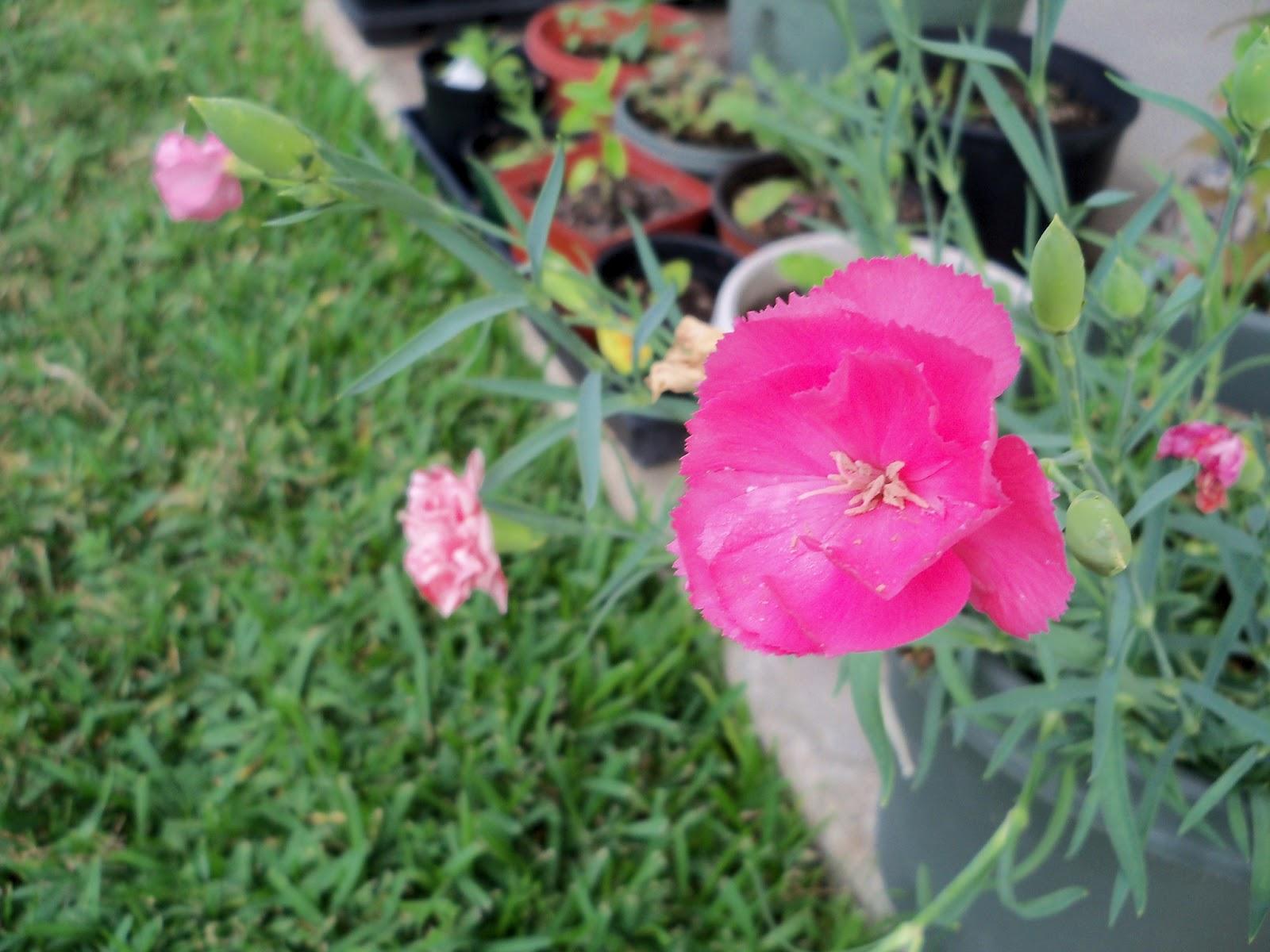 Gardening 2012 - 115_2174.JPG