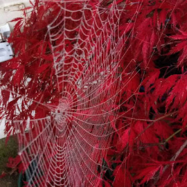 Foggy Morning Treat by Rich Havas - Nature Up Close Webs