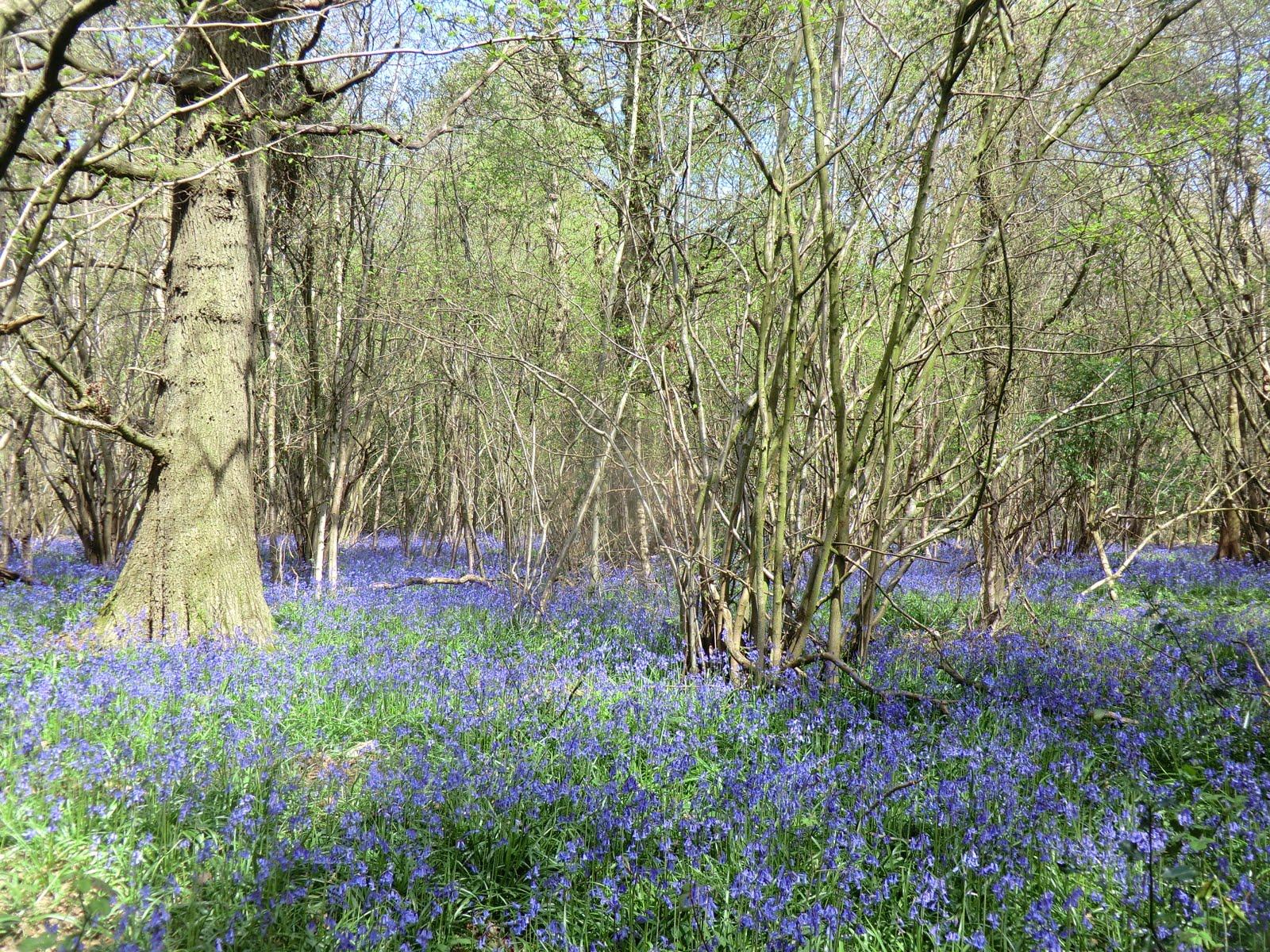 CIMG4198 Frith Wood