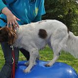 Survival voor Baas en Hond 2012 - DSC_0510.JPG