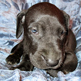 Available black male