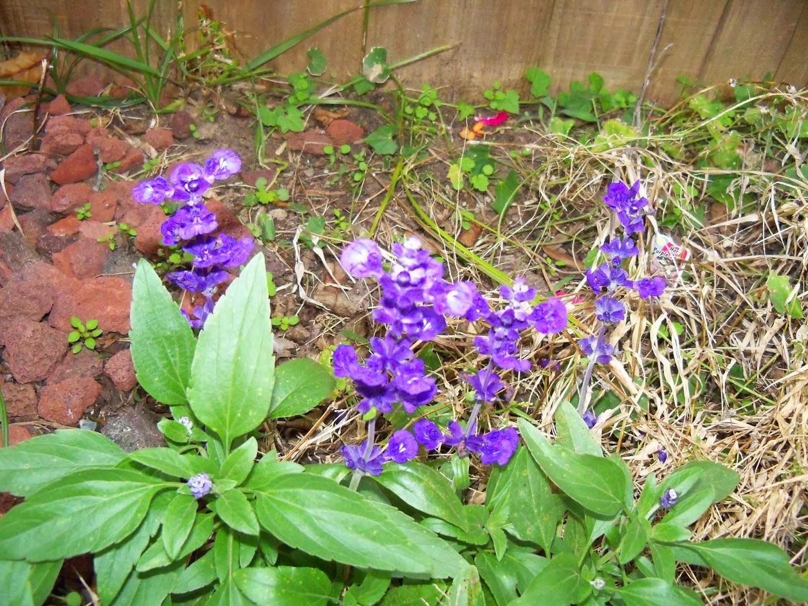 Gardening 2014 - 116_6272.JPG