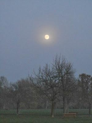 Vollmondnacht im Donaupark