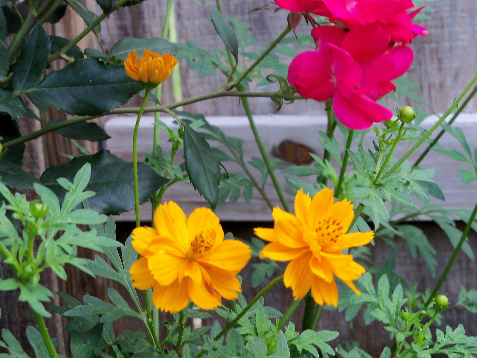 Gardening 2011 - 100_8235.JPG