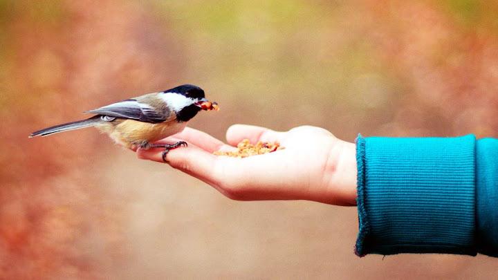 Con chim trong bàn tay
