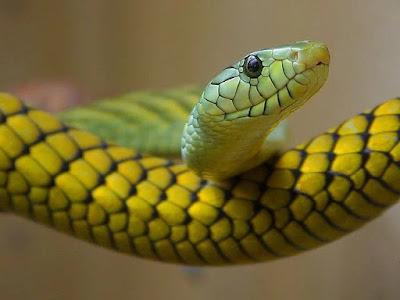 Snake Facts !  सांप से जुड़े हैरान कर देने वाले रोचक तथ्य   Unique Information About Snakes