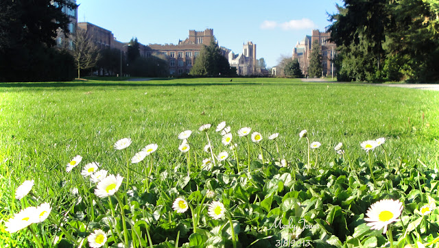 Even the teeny tiny small daisies are blooming in the lawn...