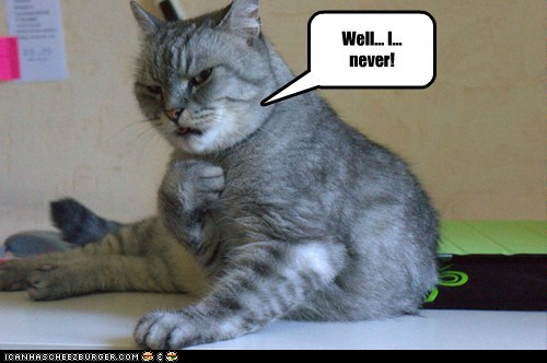 Funny cat image