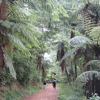 Rotorua - Wanderung um den Green & Blue Lake