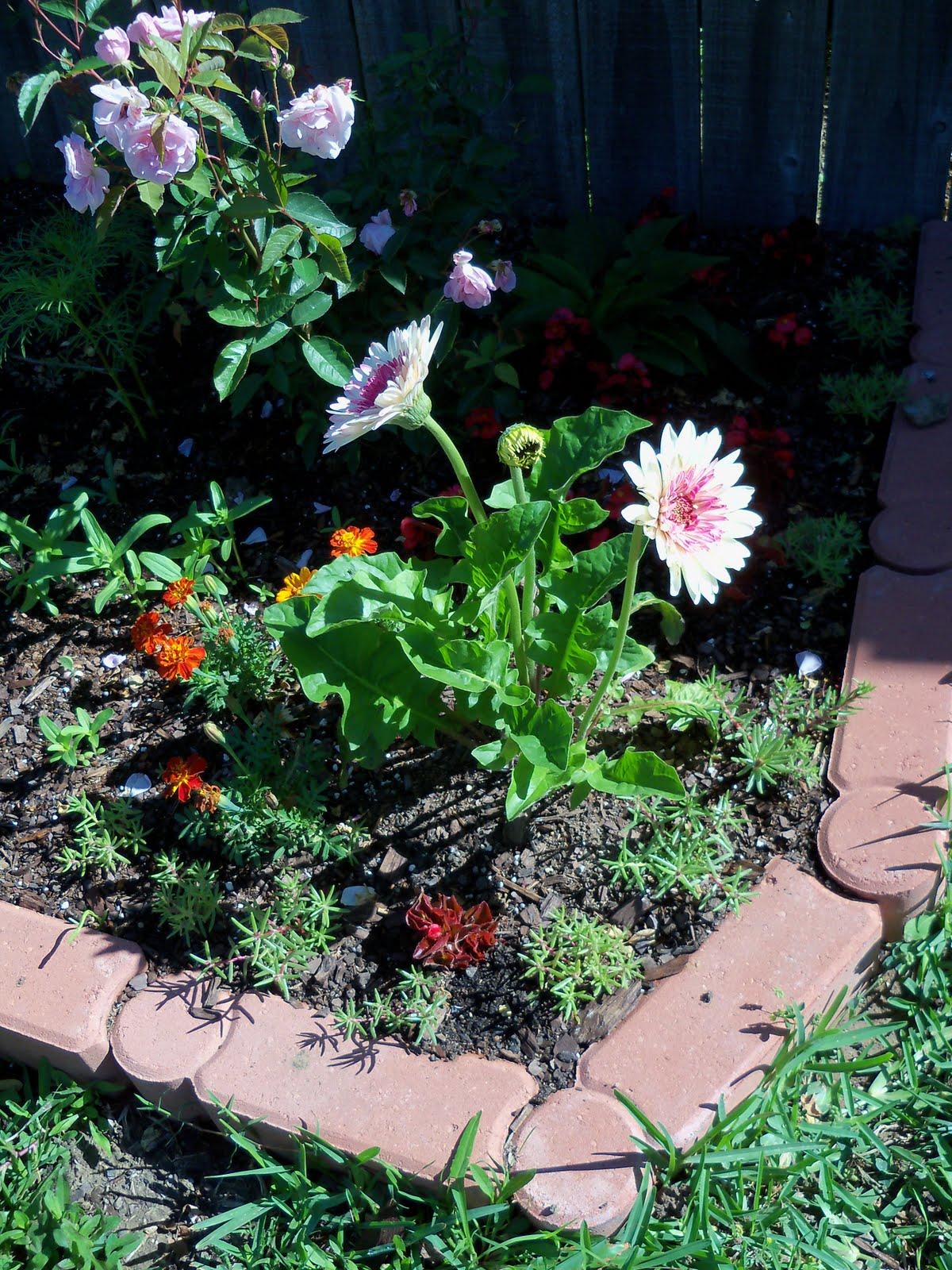 Gardening 2010 - 101_1257.JPG