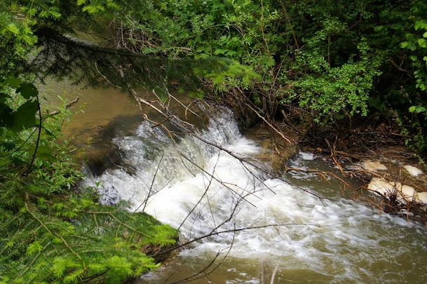 Jawornik, potok