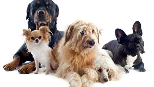 perro-razas-848x477