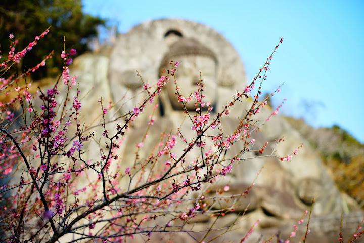 nihonji daibutsu sakura