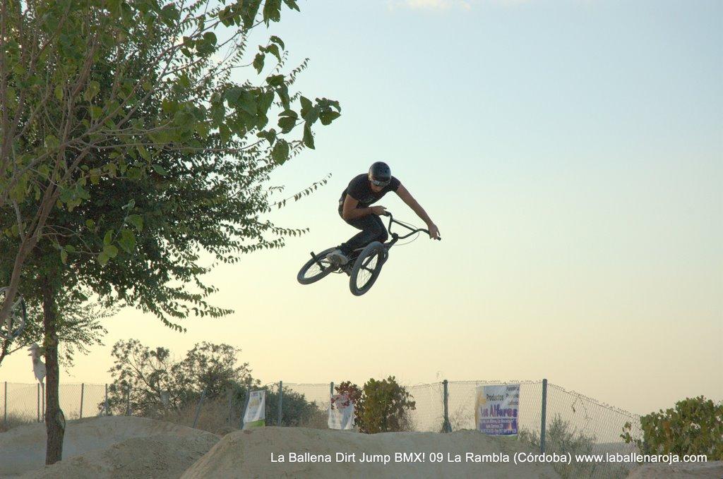 Ballena Dirt Jump BMX 2009 - BMX_09_0146.jpg