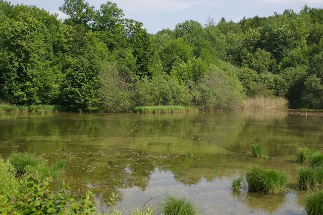 Étang des Marots, Forêt de Châtillon (Côte d'or), juin 2006. Photo : J.-M. Gayman