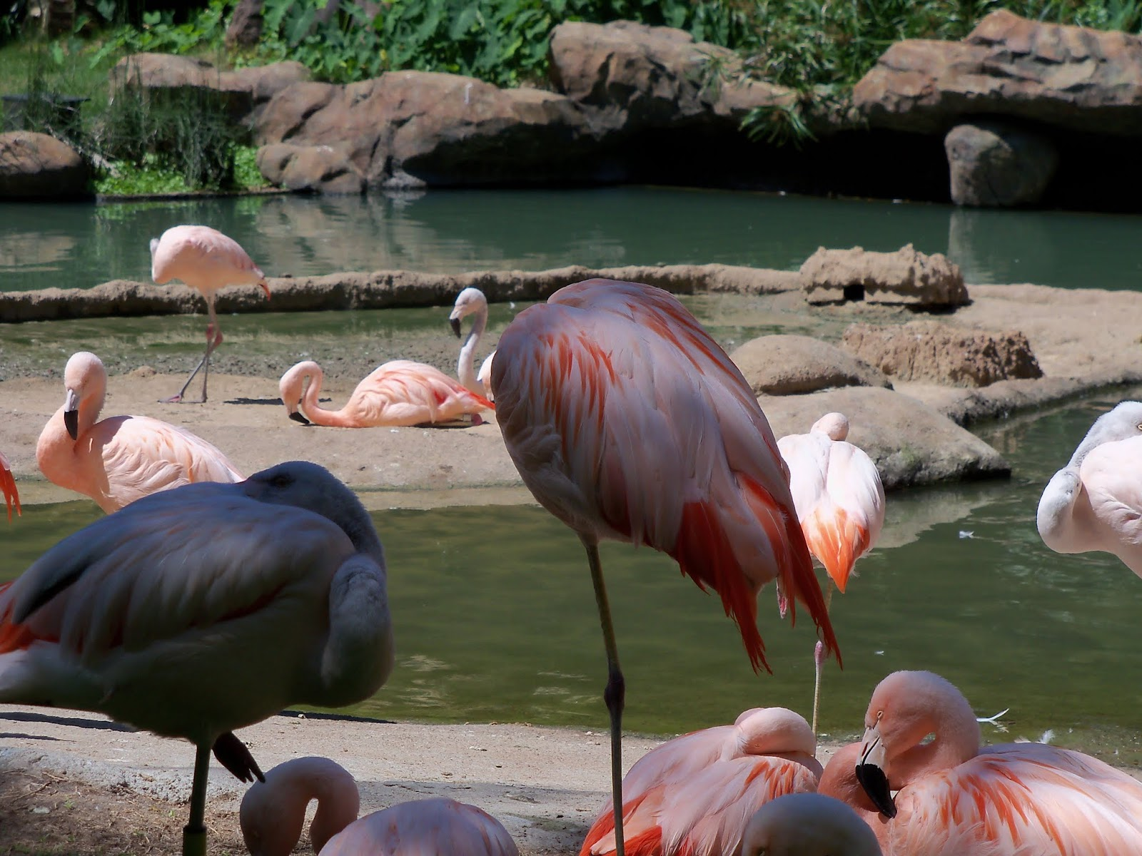 Houston Zoo - 116_8453.JPG