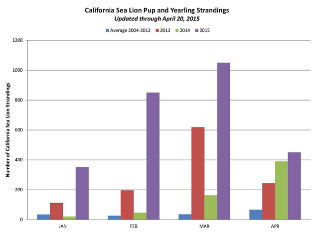 Comparison of monthly strandings for California sea lion pups and yearlings in 2013 and 2015 versus the average stranding rate (2004-2012). Graphic: NOAA Fisheries