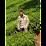 Mandar Padmawar's profile photo