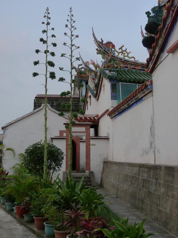 TAIWAN.Dans la région de Nantou, au centre de Taiwan - P1100332.JPG