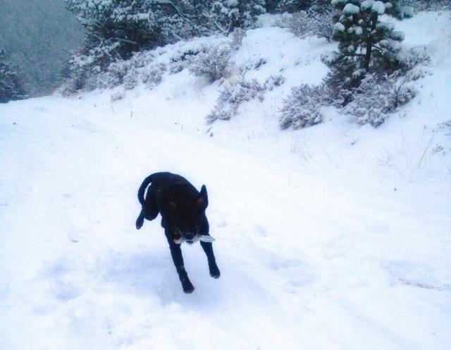 snow frolick