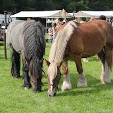 Paard & Erfgoed 2 sept. 2012 (98 van 139)