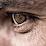 Emilio Marruso's profile photo