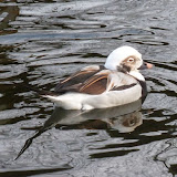 Livingston Ripley Waterfowl Conservancy - P1020568.JPG