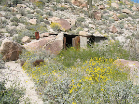 Desert Sunflowers frame the line house