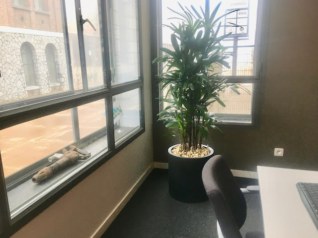 hippe zeldzame kamerplant kopen en plantenbak huren voor kantoor of bedrijf Antwerpen Gent Limburg Brussel Vlaams-bomen kopen of huren voor bedrijven interieur