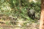 2009/9/19 こどもの森ビッグママファミリーの三頭 1/3 この後の写真までの3枚が同じ時に撮った写真。ビッグママの2頭のこどもニャンニャンとアカがいっしょにいる唯一の写真となった。