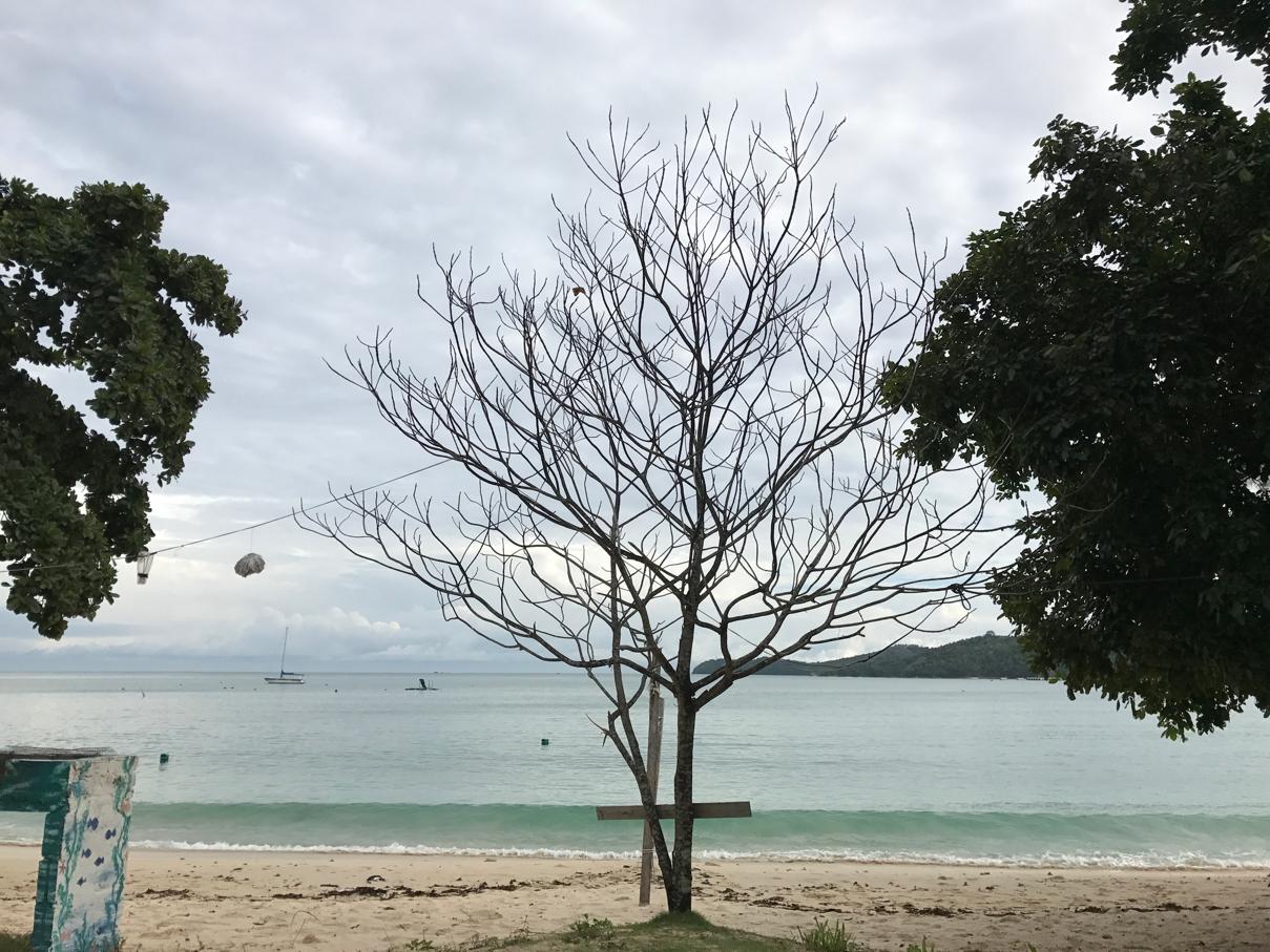 mana pokok kelapak?