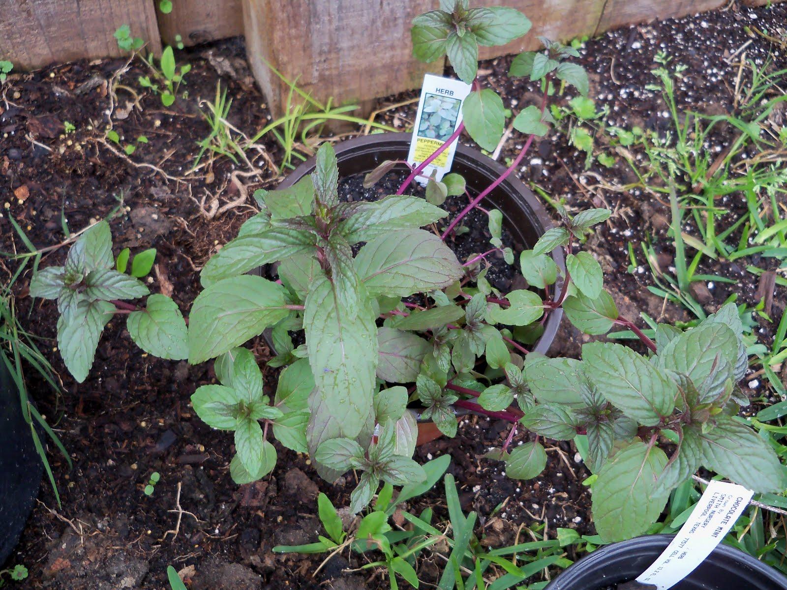 Gardening 2010 - 101_0297.JPG