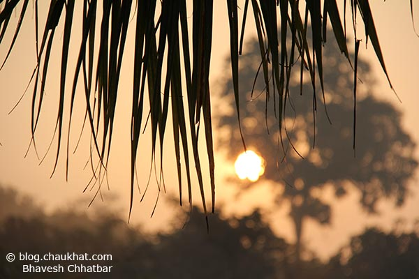 Sharp and tapering leaves of a coconut tree with a beautiful painting-like scene of a hazy sunrise and a tree