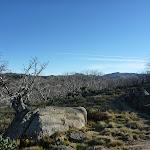 Trees at Bobs Ridge (281045)