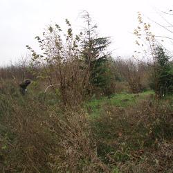 35 Sportlandgoed Zwartemeer 27-11-2011