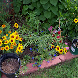 Gardening 2010, Part Three - 101_3760.JPG