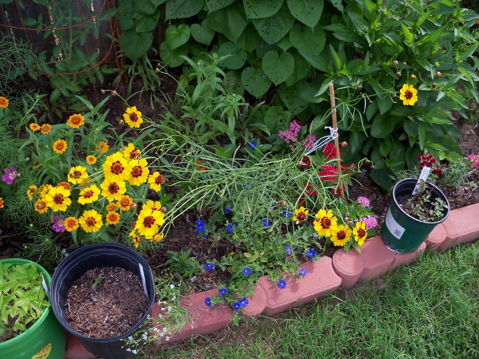 Gardening 2010, Part Three - 101_3760.JPG